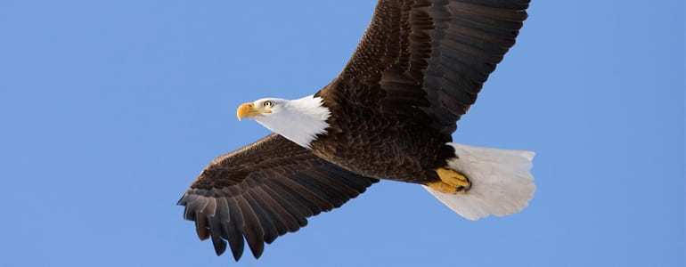 drones attacked by eagles